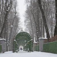 Зимой в Летнем саду :: Наталия П