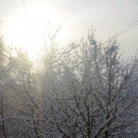 Солнце :: Ольга Беляева