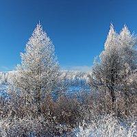 Морозное утро :: Александр Велигура