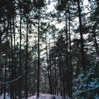 лес :: Inna Pervachenko