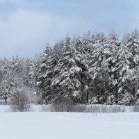 Сказочный лес :: Андрей Снегерёв