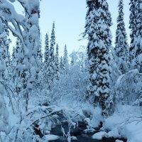 Зима,холода... :: Ольга