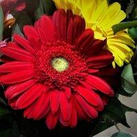 Цветок с букета :: Алла ZALLA