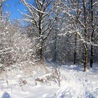 Зима :: Владимир Холодницкий