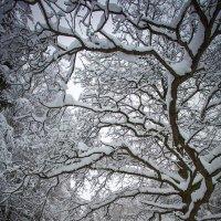 В зимнем парке :: Андрей Шаронов