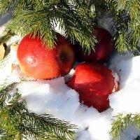 Яблоки на снегу ... :: Олег Кондрашов