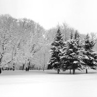 Зимний этюд... :: Nikanor
