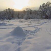 В Москве тоже бывает зима. Но не часто :: Андрей Лукьянов