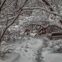Занесённые снегом. :: Василий Ярославцев