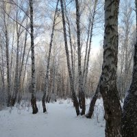 Зимний день :: Татьяна Котельникова