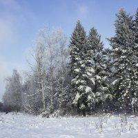 Мороз и солнце, день чудесный... :: Юльяна Андреевна