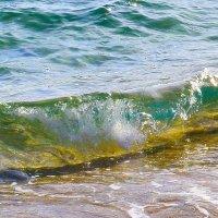 Набежавшая волна :: Виктор Шандыбин