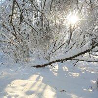 морозный день :: ninell nikitina