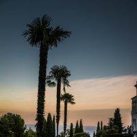Лужайка у Ливадийского дворца :: Никита Санов