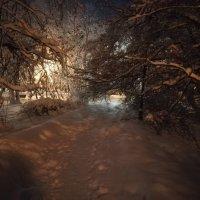 Москва.Вечер в Петровском парке :: Владимир Прокофьев