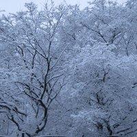 В зимнем парке :: Дмитрий Никитин