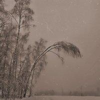 Январь в тумане :: Виктория Нефедова