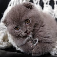 Красотка Боня :: Виолетта