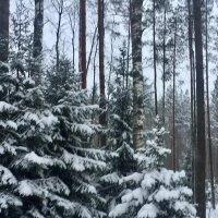 Какой покой в снегах таится... :: Ирэн