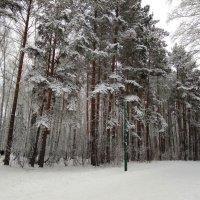 ... в зимнем парке :: Татьяна Котельникова