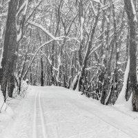 В глубину леса :: Юрий Стародубцев