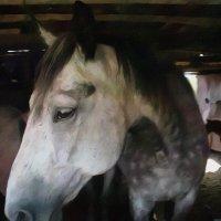 Грустная лошадь :: Владимир
