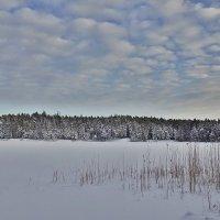 Зимний пейзаж :: Swetlana V