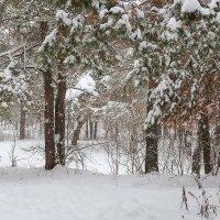 Зимний пейзаж :: Александр Синдерёв