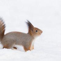 По колено в снегу :: Alex Bush