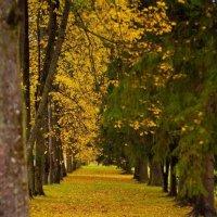 Прогулки в парках! :: Натали Пам