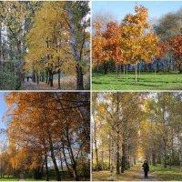 Московская осень :: Дмитрий Никитин