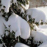 Зима, снег, лес :: Вячеслав