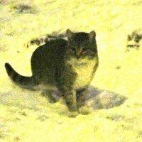 Кошка зимой :: Дмитрий Никитин