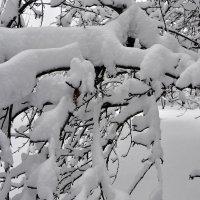 Зимняя сказка. :: Елена Дёмина