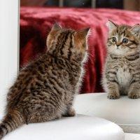 Котенок и зеркало :: Алена Торопов