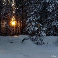 Поздний вечер в зимнем лесу :: Сергей