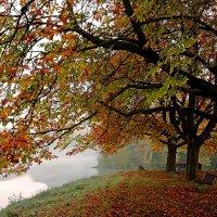 Красные листья :: Alexander Andronik