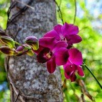орхидея :: Dmitry i Mary S