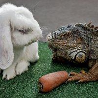 Ещё раз морковку возьмёшь, морда наглая, будешь иметь дело со мной!!! :: Сергей Черных