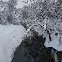 подмосковный лес 2018 (снято смартфоном) :: юрий макаров