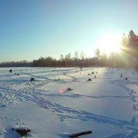 Морозный солнечный денёк! :: Сергей F