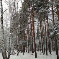 Лес под снежной бахромою ... :: Татьяна Котельникова