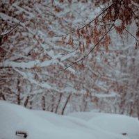 Первый снег был самым белым :: Юля Грек