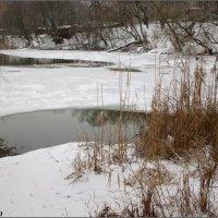 Зимним днём на берегу реки :: Нина Бутко