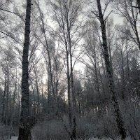Красота зимы :: Татьяна Котельникова