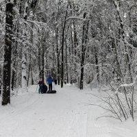 Сказочный лес :: Yuri Chudnovetz
