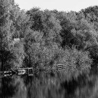 Осень.Сентябрь 2014. Озеро Линёво :: Андрей Страхов