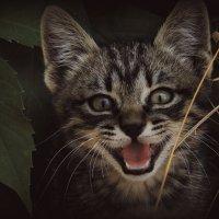 Маленький хищник :: Evgenia Glazkova
