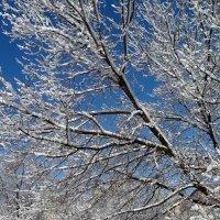 Зима :: Владимир Бровко