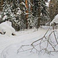 По лесным тропинкам :: Галина Новинская
